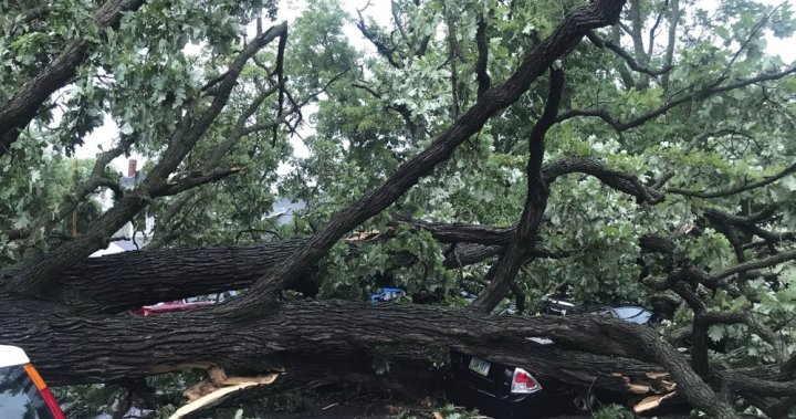Powerful wind storm downs trees, flips cars across U.S. Midwest - National