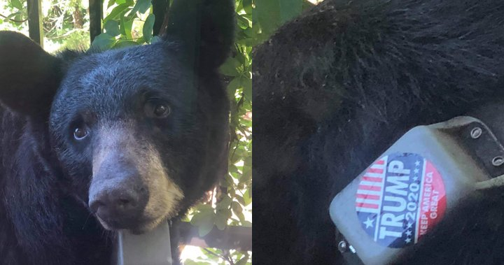Someone is slapping 'Trump 2020' stickers on bears near a U.S. town - National