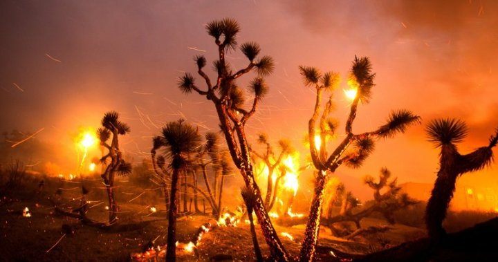 Strong winds force California wildfire into desert floor, burning houses - National