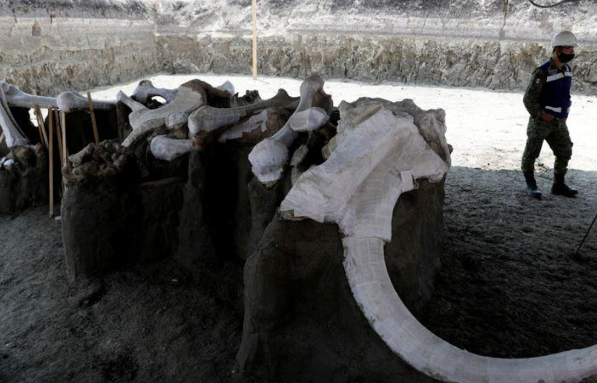 Mexican airport site emerges as major graveyard of Ice Age mammoths