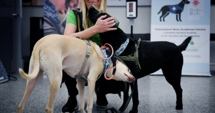 Finland using dogs trained to sniff out coronavirus at Helsinki Airport - National
