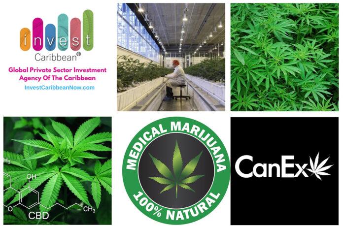 icn-canex-partners-on-marijuana-funding