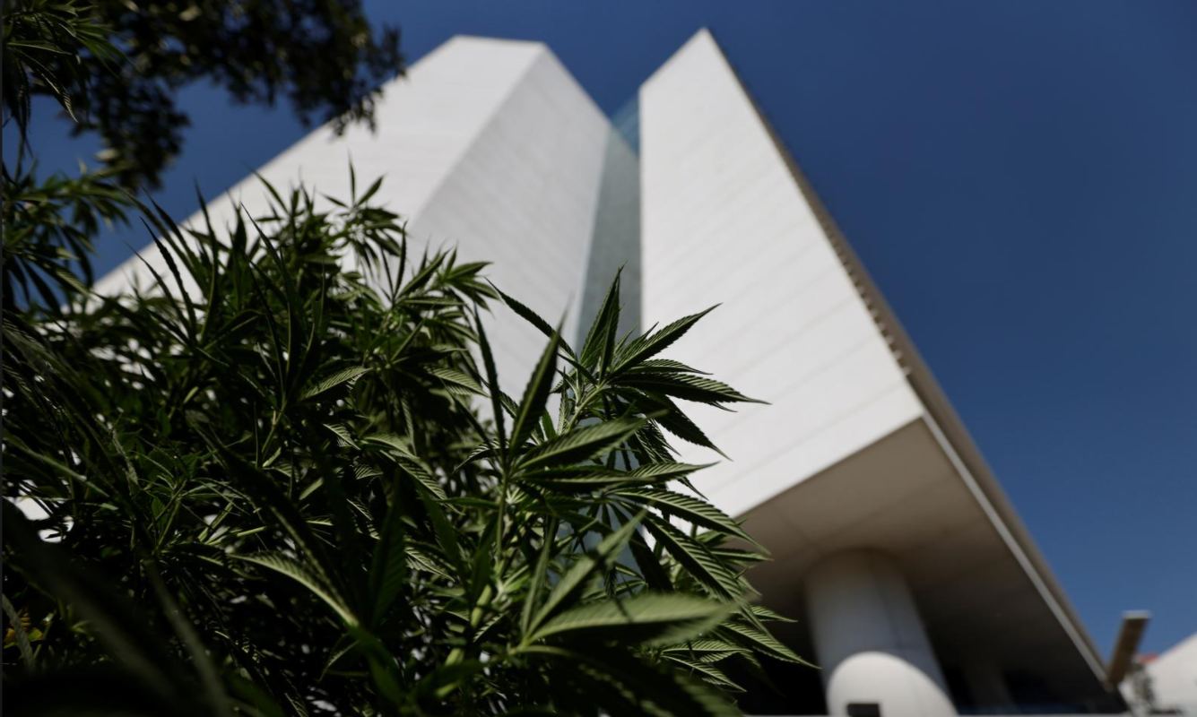Mexico's Senate approved a landmark cannabis legalization bill